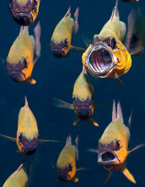 .Wild Animal, Scubas Diving, Animal Bali, Baby Boys, Sea, Exotic Fish, Angry Fish, Baby Dogs, Amazing Photos
