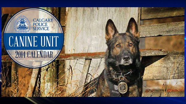 The Calgary Police Service's canine charity calendar is almost sold out and it has only been out for two days.  The calendar features the police service's 19 dogs from the Canine Unit and went on sale on Wednesday.  Read more: http://calgary.ctvnews.ca/calgarians-snap-up-cps-canine-calendars-1.1443346#ixzz2e9pBh8Pp