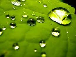 תוצאת תמונה עבור bubbles nature