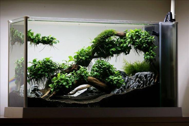 Favourites the roots of petite by lauris karpovs this for Petit aquarium