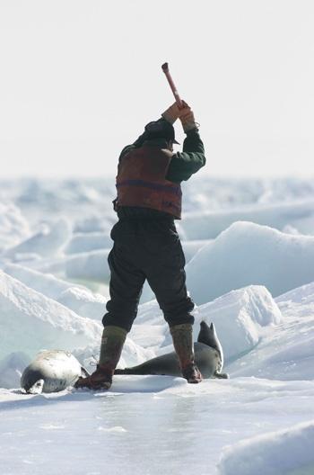 Need to establish human shields/walls internationally. Stop the seal hunt.