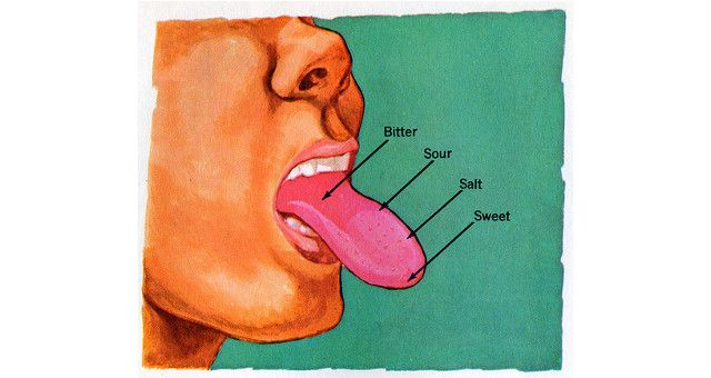 Everybody has seen the tongue map – that little diagram of the tongue with different sections neatly cordoned off for different taste receptors. Sweet in the front, salty and sour on the sides and bitter at the back.