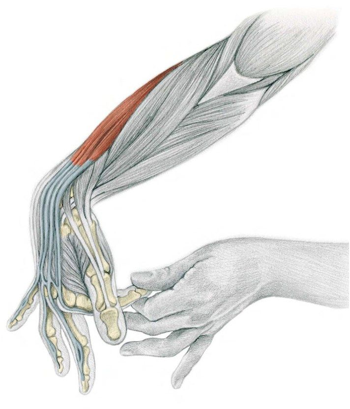 26. Finger by Finger Flexion With Assistance