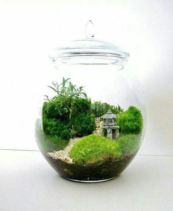 Fairy garden terrarum