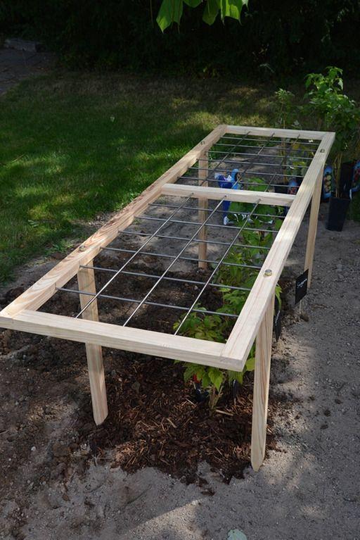 Ein Himbeerspalier. Gitter für Himbeere liegt waagerecht über dem Beet lässt sich einfach selber bauen. | Rechte: MDR/Daniela Dufft
