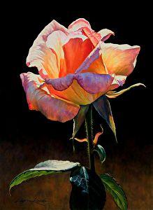 """Radiant Rose by Lauren Knode Pastel ~ 20"""" x 16"""""""