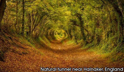 Natural tunnel near Halnaker, England