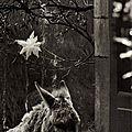 Vivement Noël ...de Daniel Picouly