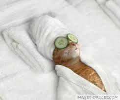 """Résultat de recherche d'images pour """"chat drole"""""""