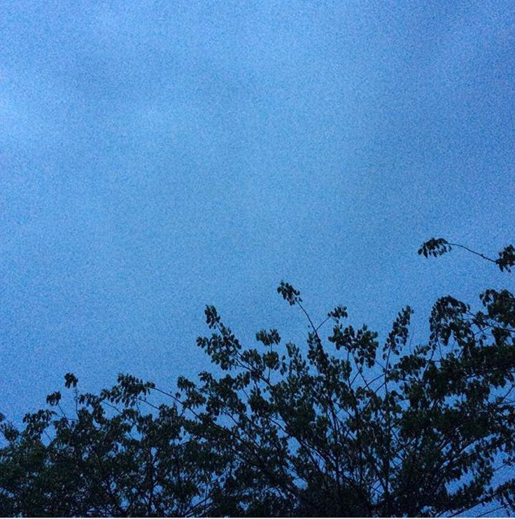 The leaves and the dark sky.. we can see each other from afar yet we cant reach one another...
