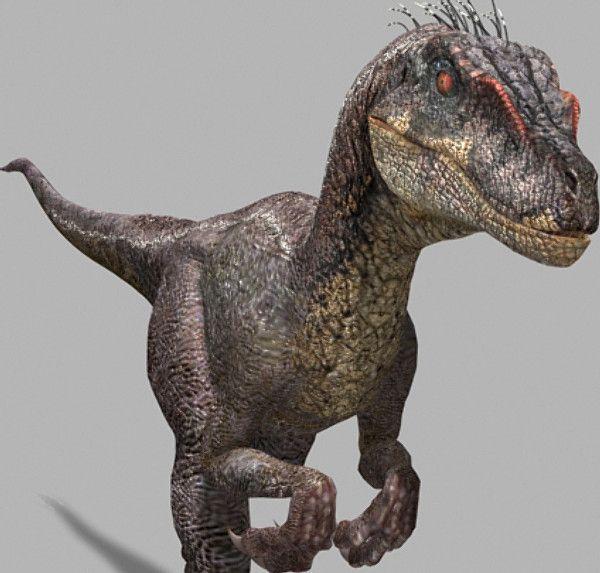 velociraptor anatomy -...