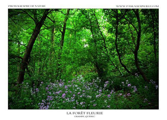 La forêt fleurie Prise à Granby, Québec, Canada http://www.paskalrainville.com/