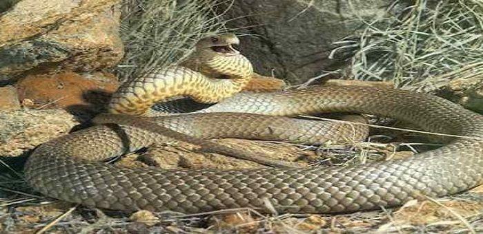 Έχει γεμίσει η Ελλάδα φίδια. Τι πρέπει να κάνετε μόλις το δείτε Crazynews.gr