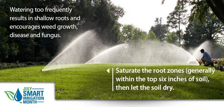 Landscape Watering Tip: Watering too frequently results in shallow roots and encourages weed growth, disease and fungus. Saturate the root zones (generally within the top six inches of soil), then let the soil dry. #sprinkler #landscape #irrigation #valve #timer #lawn #plant #grass #garden #yard #backyard #water #diy #rainbird (via http://store.rainbird.com)