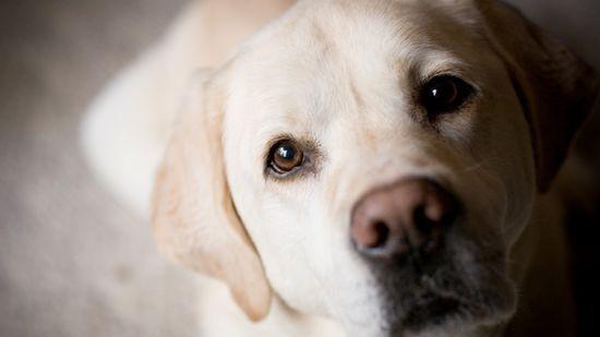 10 Cosas curiosas sobre perros