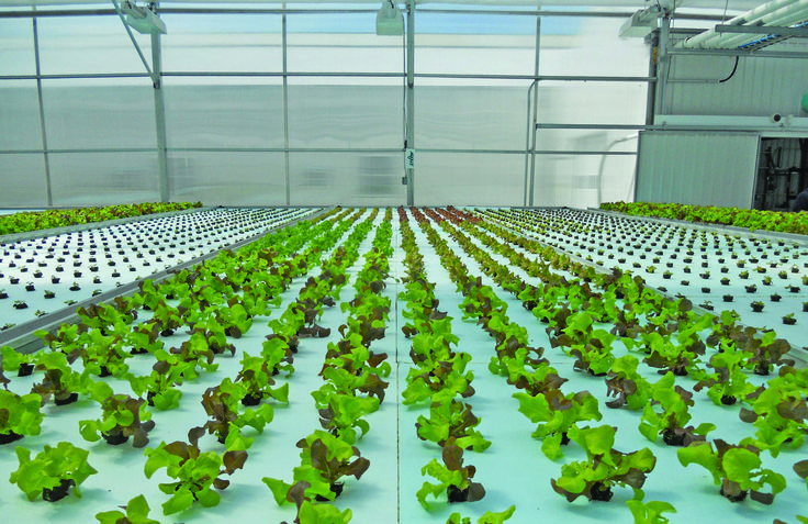 Grow Your Indoor Garden with the help of Hydroponic Gardening. Maxgrowshop sells high quality hydroponic grow products in entire Europe.
