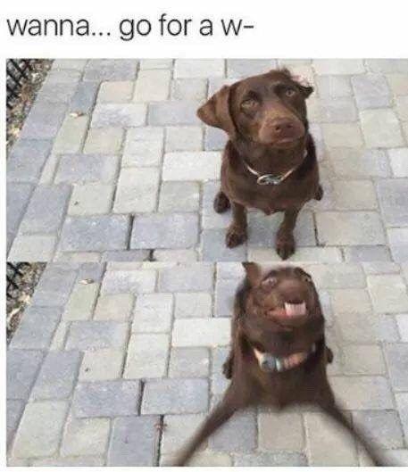 21 Memes, bei denen Ihr Hund definitiv lachen würde, wenn er lesen / lachen kö… – Ela💫
