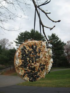 4 Crazy Kings: Stale Bagel Bird Feeder