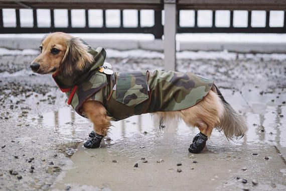 Dachshund Clothes That Actually Fit Dog Winter Coat Dog Coats