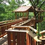 Treehouse for Kids' Growing Partner