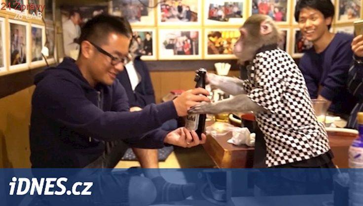 Z opičí obsluhy jsou hosté nadšeni, pro zoologa to má úroveň cirkusu