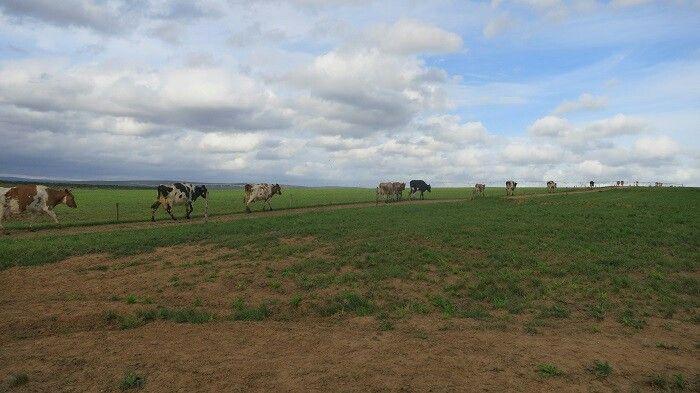 Stellenhof Farm Stay