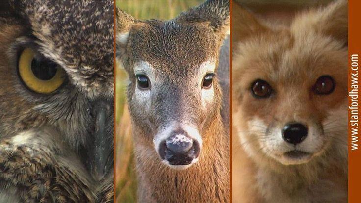 Vahşi Yaşam İçin Umut Merkezinden Kısa Videolar - Hope For Wildlife  http://www.stanfordhawx.com/2015/01/vahsi-yasam-icin-umut-merkezinden-kisa-videolar-hope-for-wildlife.html #vahsiyasam #hopeforwildlife #wildlife #video