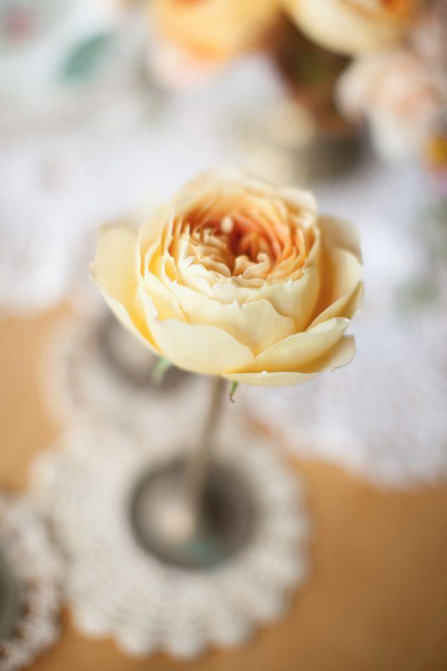 Peach flower / Joanna Tano Photography