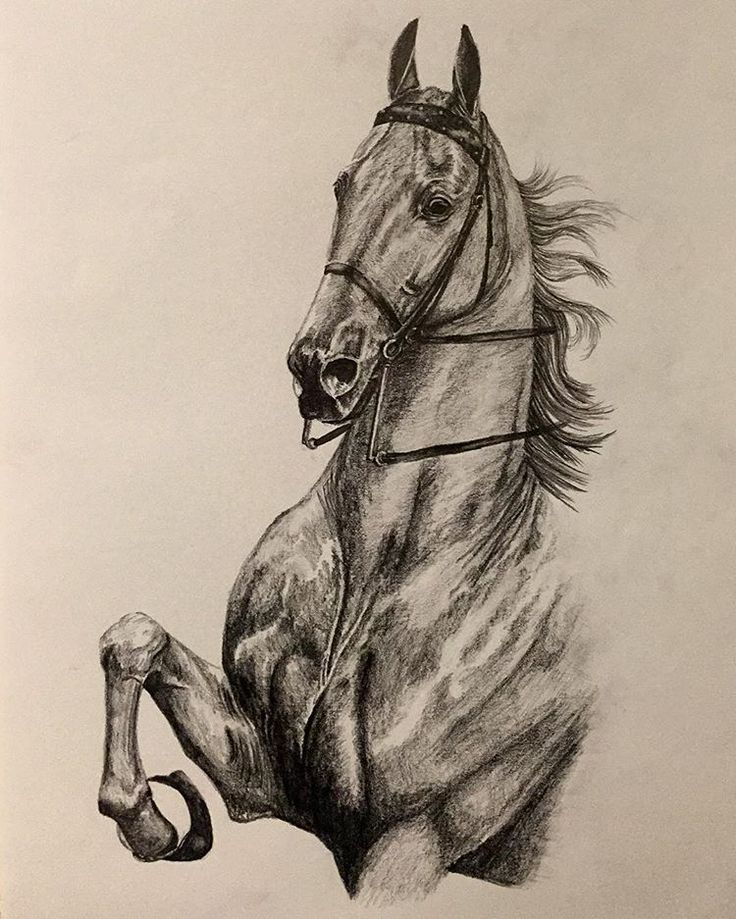 WGC CH Bravo Blue   commissioned by Sarah Bennett for Elizabeth Goth's birthday   #saddlebred #horse #asha #wgc #ch #americansaddlebred #american #art #artist #artwork #drawing #pencil #graphite #portrait