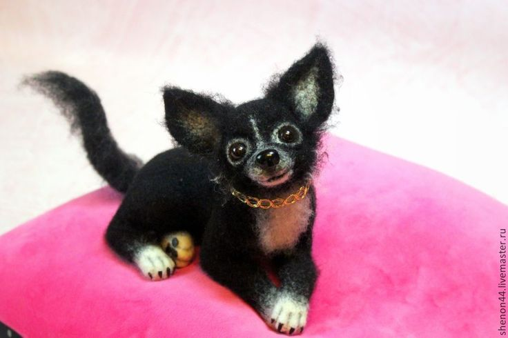 Я-девочка!) - чёрно-белый,чихуахуа,собачка,валяная игрушка,Сухое валяние