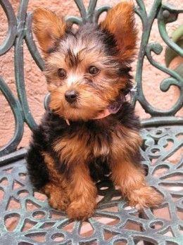 Top 10 Budget Friendly Dog Breeds