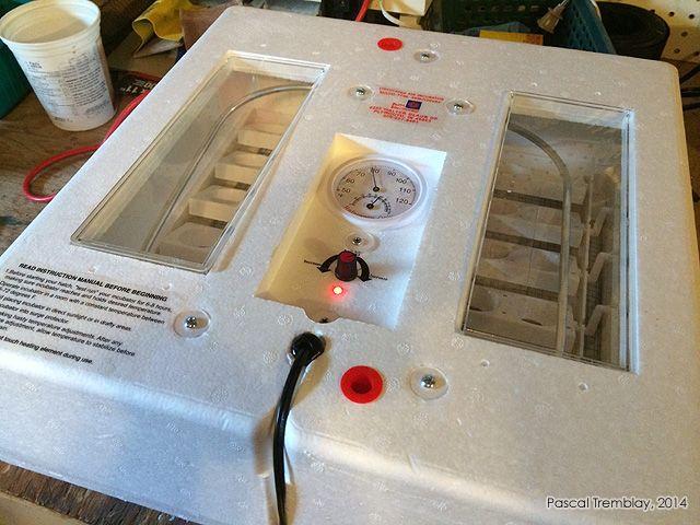 Température couveuse automatique - thermostat couveuse - thermostat incubateur. Voir: http://www.france-jardinage.com/couveuse-automatique/couveuse-artificielle.html