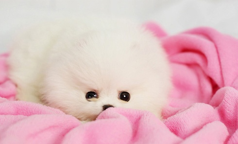 Oh my gosh! I want!
