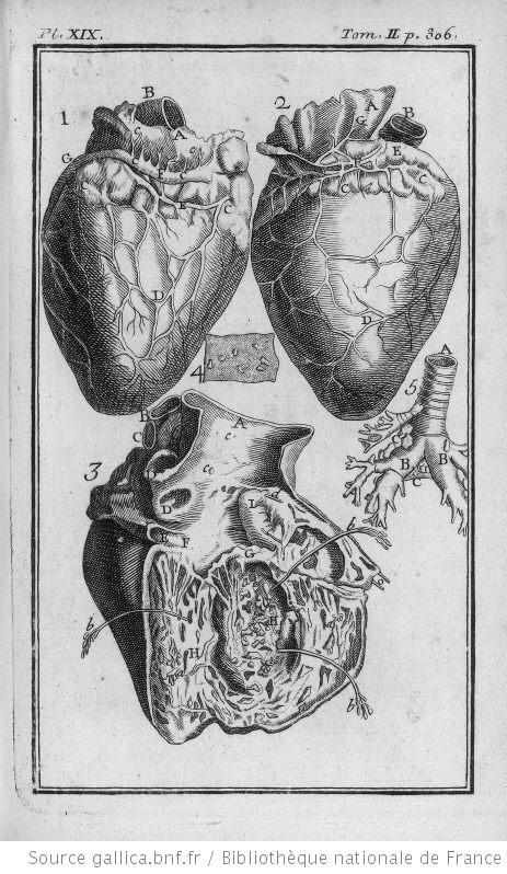 Les 25 meilleures id es de la cat gorie coeur humain - Dessin du coeur humain ...