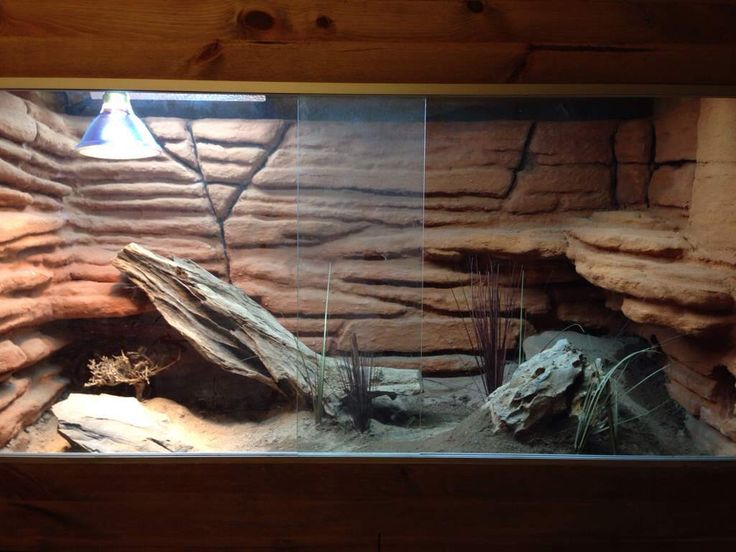 A nice beardie enclosure by laksomeister from Sweden on Reptile Forums Uk.