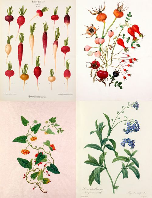 botanical prints - such lovely colors