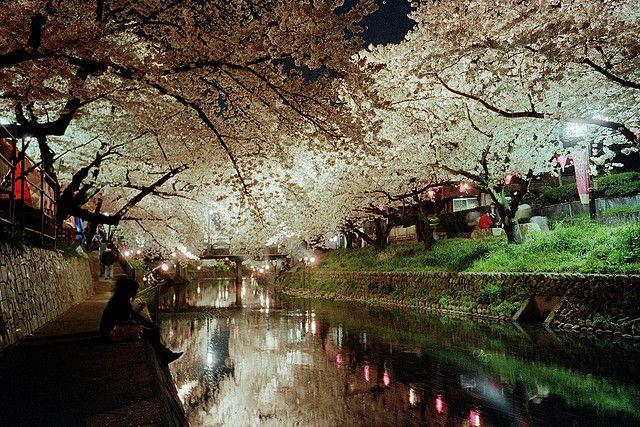 愛知県岩倉市の五条川で撮りました