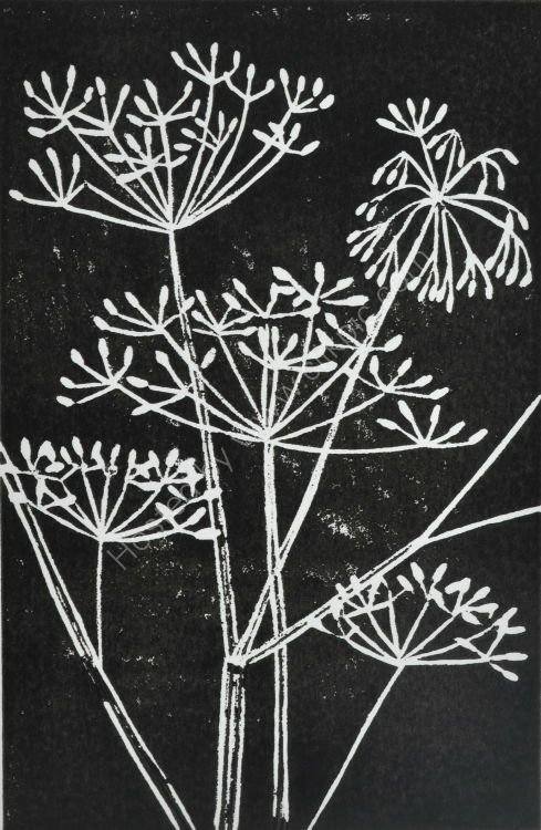 Cow Parsley Seed Heads-black