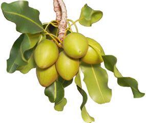Venu d'Afrique de l'Ouest où il est le soin préféré des femmes noires et utilisé en pharmacopée, le beurre de karité est l'un des ingrédients de beauté phare des cheveux très secs ! Sa composition riche en insaponifiables (jusqu'à 7%, favorisant la pénétration des actifs), en acides gras (notamment linoléique et linolénique, les acides gras …