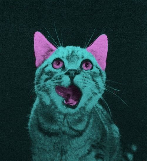 OFY LASERRR CATSSS
