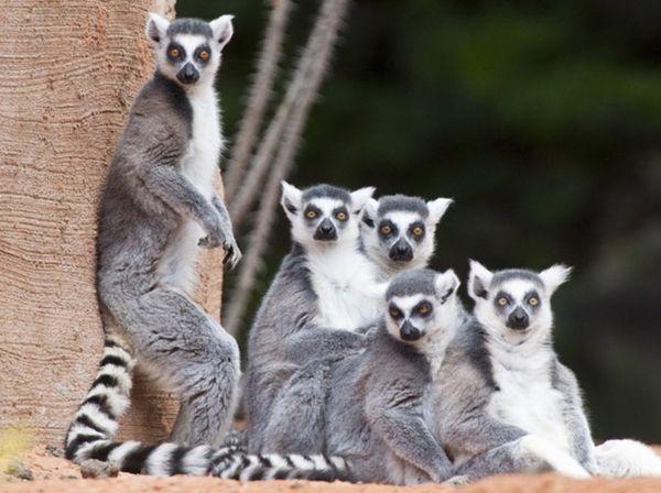 Les milles et une raisons d'aimer Madagascar :: Madagascar Urban Travel