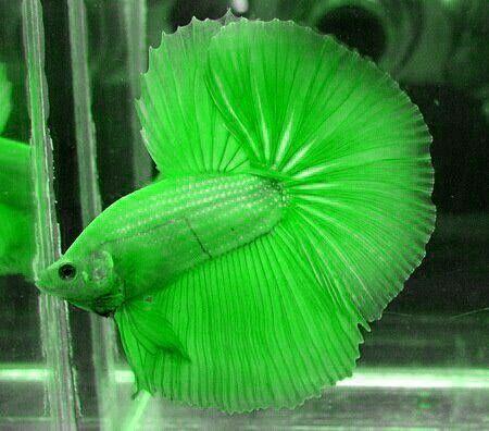 Best 25 fake fish tank ideas on pinterest cheap fish for Cheap betta fish