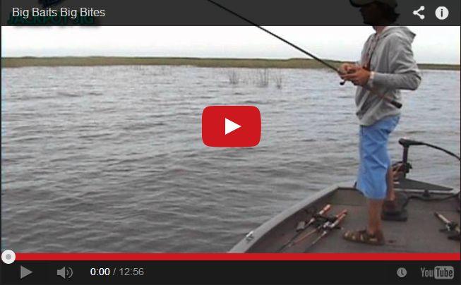 45 best images about florida fishing on pinterest swim for Fish bites bait