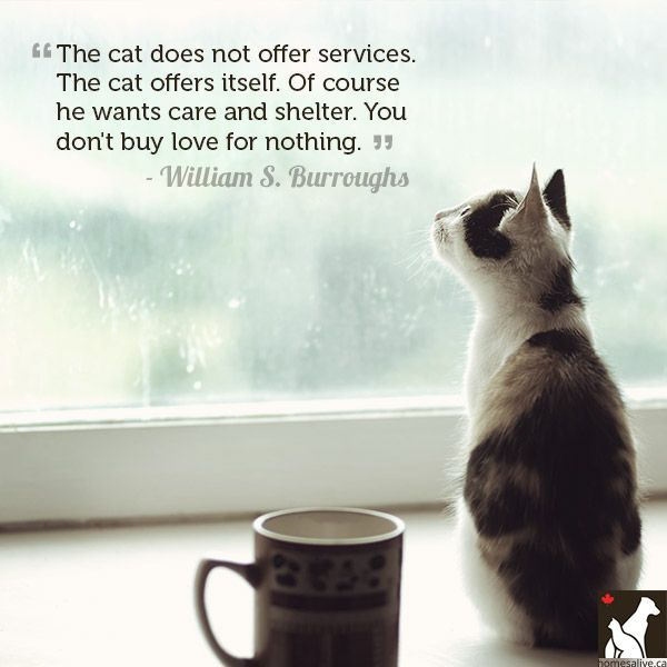 Cat Quotes: 17 Best Quotes About Cats On Pinterest