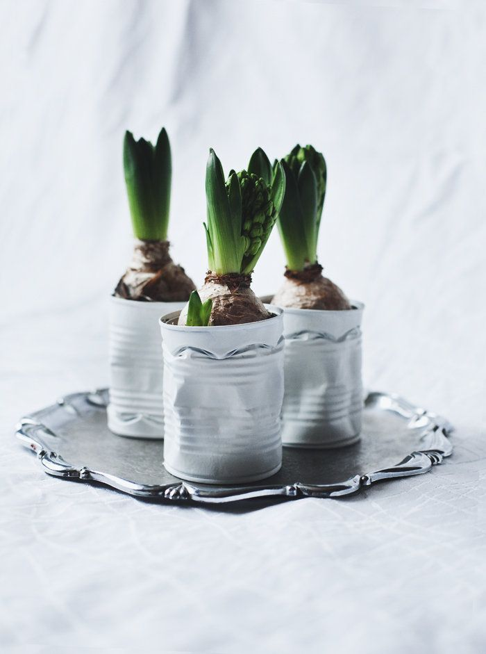 Haal jij al bloembollen in huis? Bekijk hier 10 leuke bloembol decoratie ideetjes!