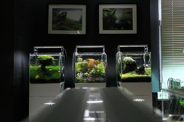 http://cumingii.wikidot.com/ryby-akwariowe-akwarystyka-akwarium-dla-kiryska-kazdego