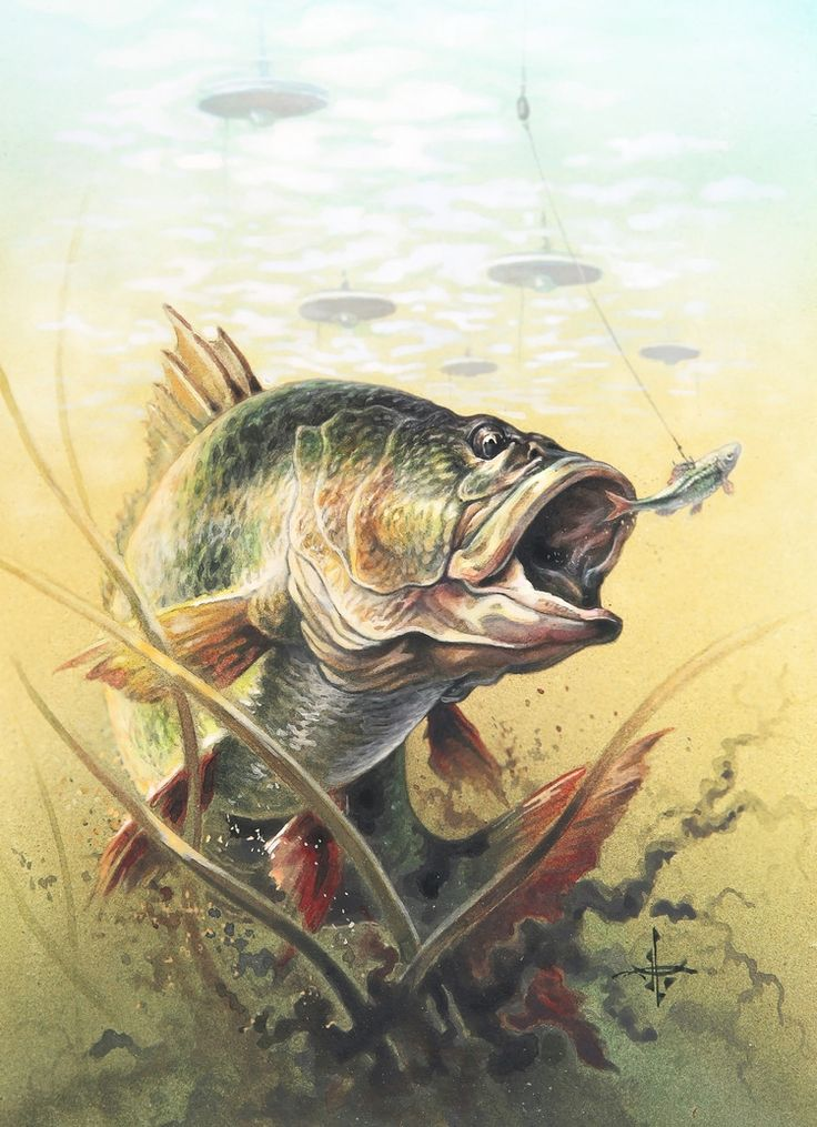 309 best images about bass fishing on pinterest for Bass fishing art