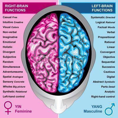 98 best images about Left/right brain on Pinterest