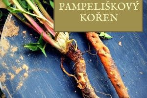 pampeliškový kořen