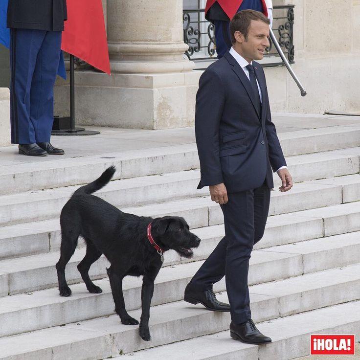 Te presentamos a Nemo, el perro cruce de raza labrador y grifón que @EmmanuelMacron y su esposa, Brigitte, acaban de adoptar en un refugio de la Sociedad Protectora de Animales. El can recibe ese nombre en honor del capitán Nemo, personaje de la novela de Julio Verne 'Veinte mil leguas de viaje submarino', por la que el presidente francés siente una especial predilección. 🐶🇫🇷 #emmanuelmacron #macron #nemo #perro